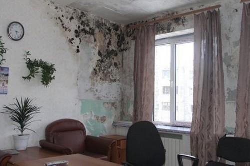 Почему плесень и грибок опасны в квартире?
