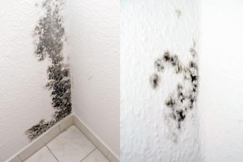 Чем грозит появление плесени в квартире?