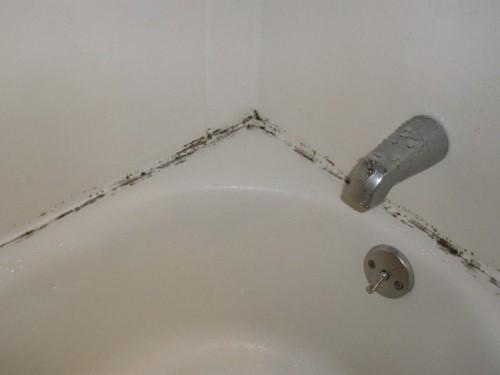 Чем вывести плесень в ванной?