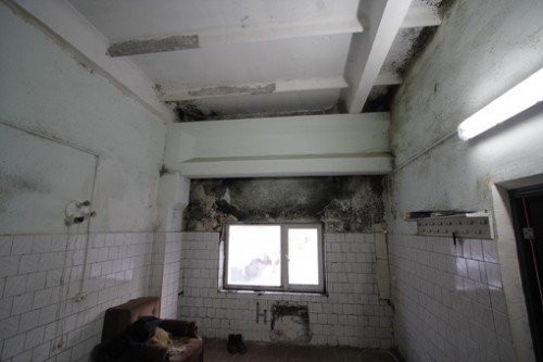 Что делать, если в вашей комнате черная плесень?