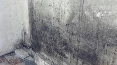 Что предпринять, если на стенах квартиры плесень?