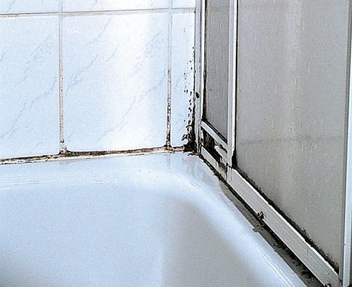 Как бороться с плесенью на плитке в ванной?