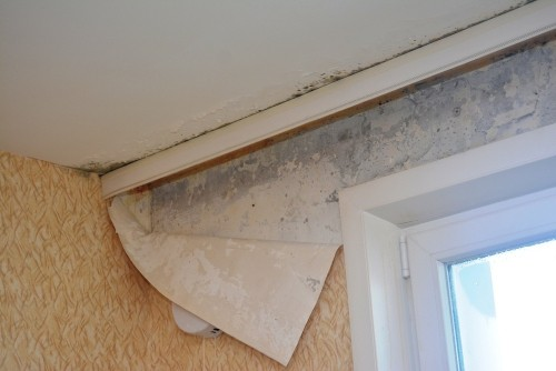 Как бороться с плесенью на потолке?