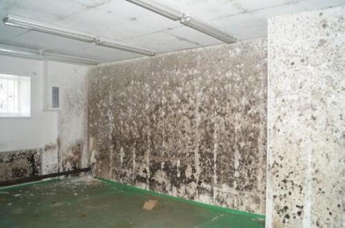 Как бороться с плесенью в квартире?