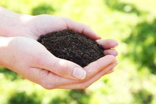 Как бороться с плесенью в рассаде самостоятельно?