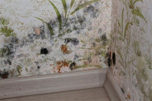 Как избавиться от плесени на стенах?