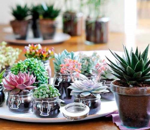 Какие растения не переносят сырость?