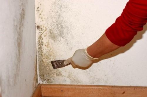 Устранение плесени в квартире на стенах